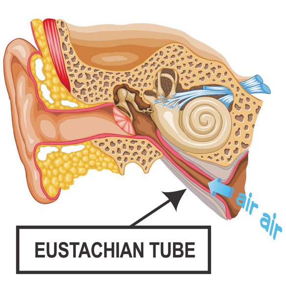 Eustachi  Eustachian Tube Exerciser - View 3