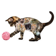 Memory Loss - Kitten Shaped Jigsaw Puzzle - 410 Pieces