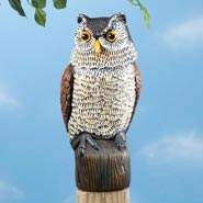 Outdoor - Scare Owl with Spring Neck by Pest-B-Gone™